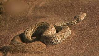 Тактика дьявола похожа на действия змеи