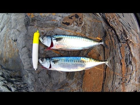 Shore Fishing - FLOAT FISHING - A Fantastic Fun Way To Catch MACKEREL