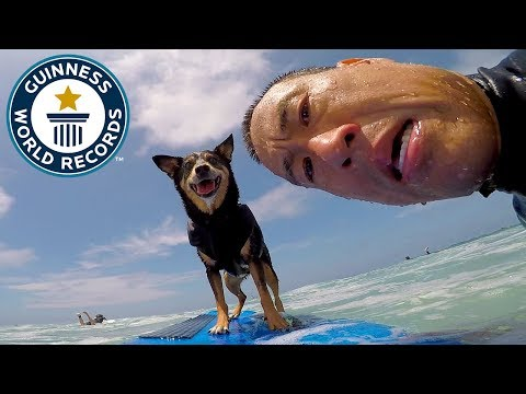 Abbie Girl: Surfing Dog – Guinness World Records