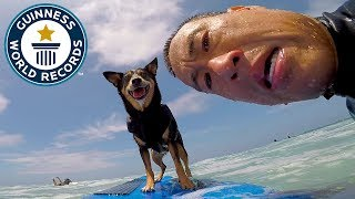 Abbie Girl: Longest wave surfed by a dog  Meet The Record Breakers