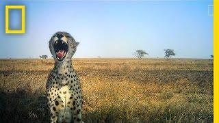Amazing Animal Selfies From the Serengeti