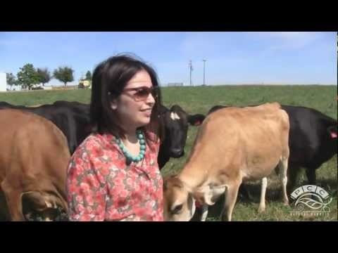 Pure Éire Dairy - All-Jersey, 100-Percent Grass-fed Herd