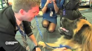 Собака убьет стресс в аэропорту