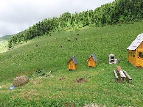 Biogradska gora, Damjanovića kolibe, Montenegro