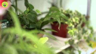Доставка цветов Мариуполь(Магазин, который входит в сеть цветочных салонов