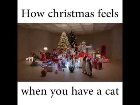 How Christmas feels when you have a cat - YouTube