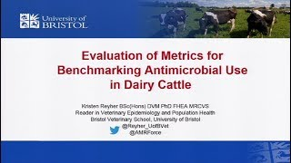 Evaluation of Metrics for Benchmarking Antimicrobial Use in Dairy Cattle