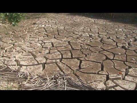 Засуха и продовольственная