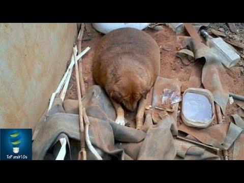كلب تم سجنه لمدة سنوات. انظر ماذا وقع عندما تم اطلاق صراحه. مشهد مبكي..!!