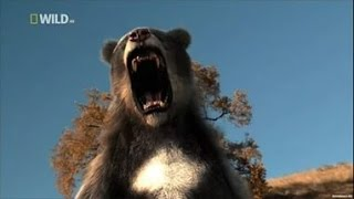 Доисторические хищники — Короткомордый медведь Документальные фильмы Nat Geo Wild HD
