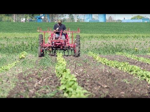 Market Garden Farming
