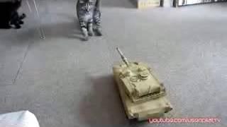 Приколы с котами, война танка против котов, только лучшее )))