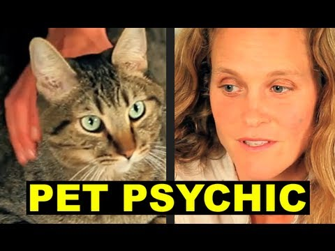 MEAN KITTY and the PET PSYCHIC
