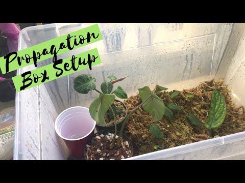 Propagation Box Set Up | How I Root & Rehab Plants