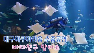 대구아쿠아리움 수중공연 바다친구맘마쇼