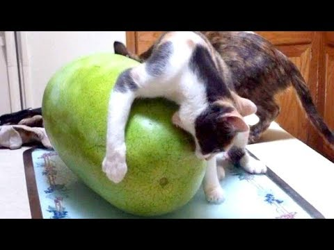 I'm NOT RESPONSIBLE if YOU DIE FROM LAUGHING - Best FUNNY ANIMAL compilation