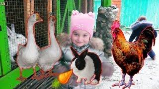 КОНТАКТНЫЙ ЗООПАРК домашние животные на ферме ГУСИ курочки ЕНОТ кролики ВЫДРЫ видео для детей