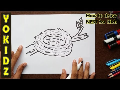 How to draw a NEST for kids