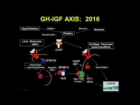 The Genetics of Growth and Growth Disorders From the Hypothalamus to the Epiphysis