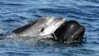 sonidos de delfines (sounds of dolphins)