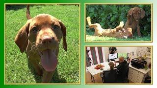 Hunde aus dem Internet | TierheimTV informiert