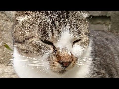 Thumbnail for Cat Video Cat Island ( Ai-no-shima , Fukuoka , Japan ) part2