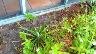 № 1180 США Доброе утро Мой двор цветы бабочки и стрекозы