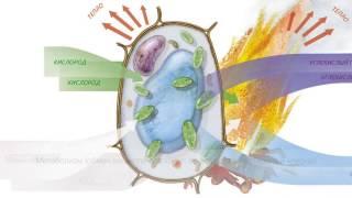 Введение в метаболизм клетки
