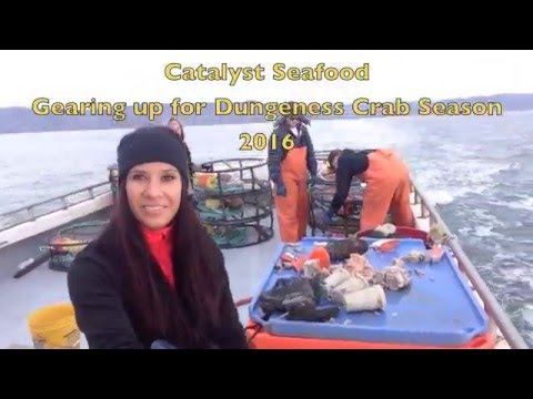 Dungeness Crabbing with Catalyst Seafood!