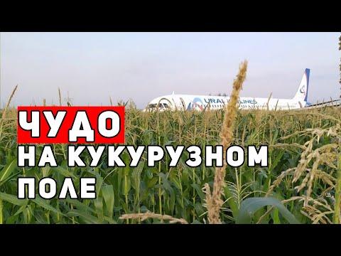 Запад отреагировал на российское чудо на кукурузном поле