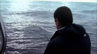 Video Pescaria Pargos e Safios Barco Micas.wmv download MP3, 3GP, MP4, WEBM, AVI, FLV Desember 2017