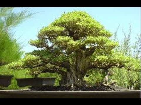 Bonsai Pohon Mini Replika Pohon Pohon Mini Hias By