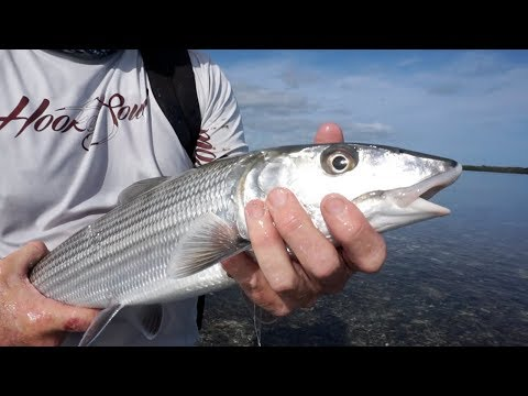 INCREDIBLE FOOTAGE BONEFISH Pushing The Flats!!!