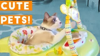 Cutest Pets of the Week Compilation April 2018 | Funny Pet Videos thumbnail