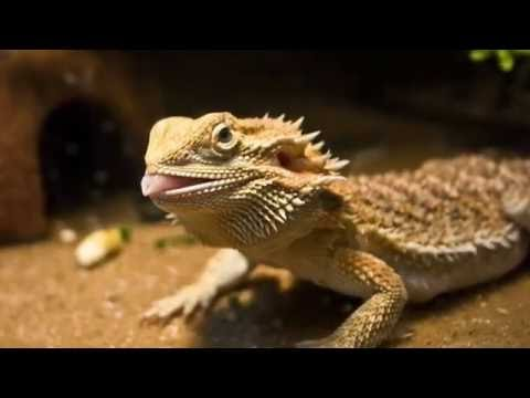The Life Of Household Pets (Trailer 2017) TV Documentary Series