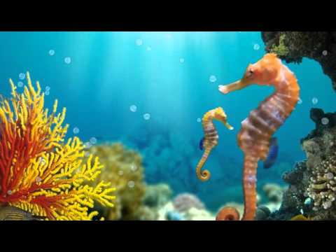 Seahorses - Animated