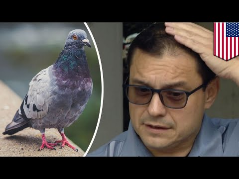 Mick Lee - Pigeon Poops on Chicago Lawmaker as He Discusses Pigeon-Poop Problem