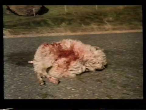 Foxtrot íslensk kvikmynd síðan 1988