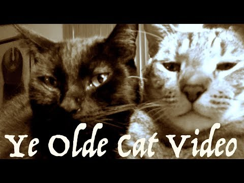FRIDAY FLASHBACK 🎥 SILENT FILM ERA CAT VIDEO🎥