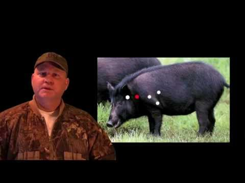 HOG HUNTING TIPS WHERE TO SHOOT HOGS