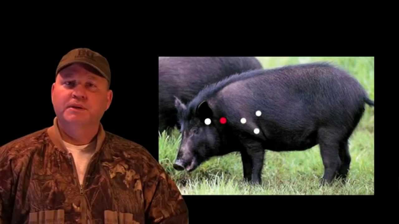 Hog Hunting Tips Where To Shoot Hogs Youtube