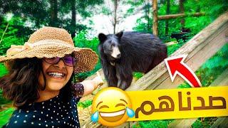 الدب الأسود الجائع  - مغامرة في الغابة