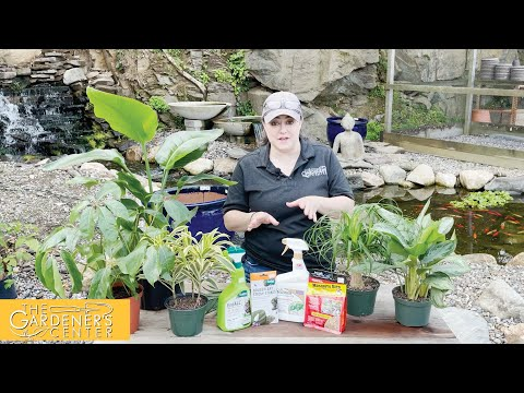 7/29/2021 Houseplant Pests with Joy