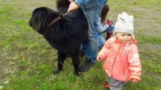 Монгольская овчарка-банхар. п-к Монголдог.
