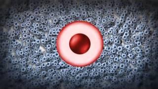 Стволовые клетки пуповинной крови и многе другое(, 2013-10-03T21:17:00.000Z)