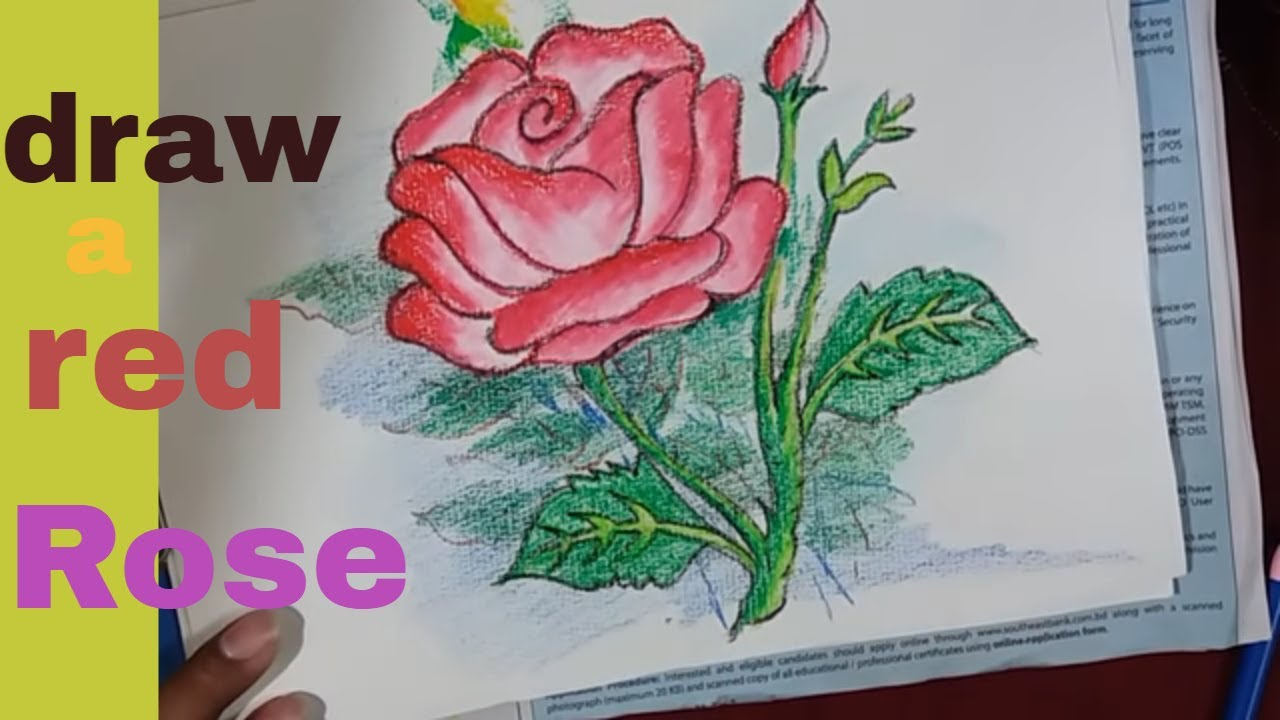 How To Draw A Beautiful Red Rose Flower Draw A Rose Flower Step By