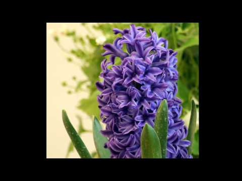 Persian new year.wmv