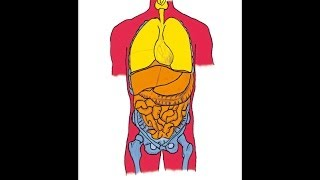 Symbol no. 47 by Martinus (1890-1981) - The Healthy Human Organism - Ole Therkelsen