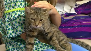 Ask the Vet: Bring Your Cat to the Vet Day