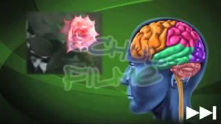 Schulfilme im Netz: DVD / Biologie: Auge